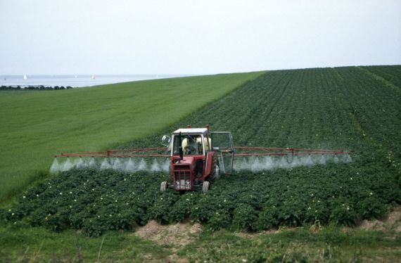 Farmer spraying a potato field